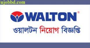 walton group new bd job circular